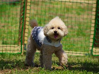 星と森のロマントピア 小型犬用 プチドッグラン(無料)ペットと遊べる!