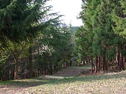 ロマントピアお散歩コース