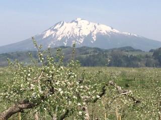 ringo Mt iwaki
